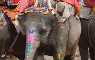 Elephant rides at Amer Fort